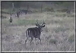 Six Bar Ranch Trophy Whitetail Video